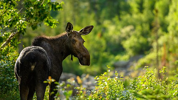 Moose CCC Ponds - Visit Pinedale, WY