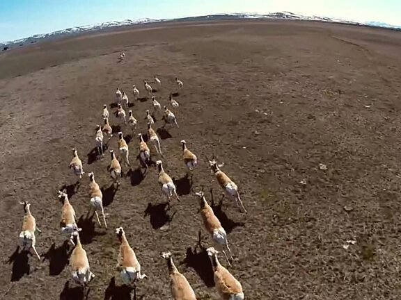Path of the Pronghorn Documentary Short